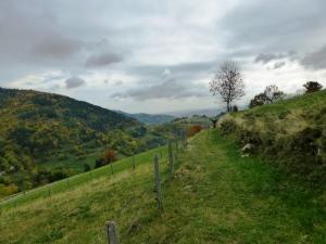 L'Ardèche verte, ouioui.